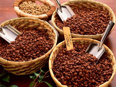 Сорти зернового кави
