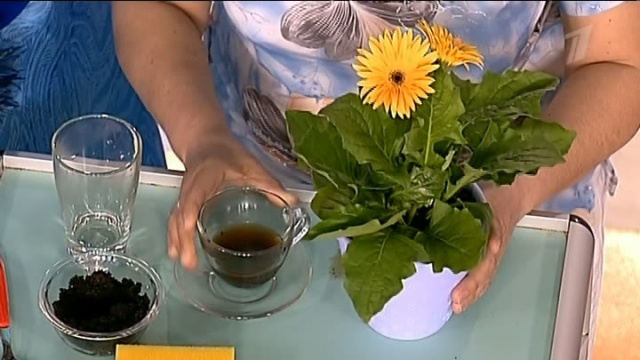 Молотый кофе как удобрение для цветов