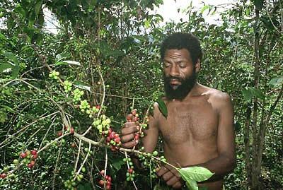 Кофе из Папуа-Новая Гвинея