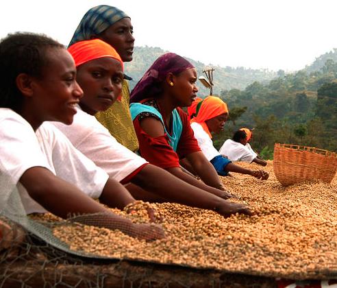 Эфиопская кофейная плантация
