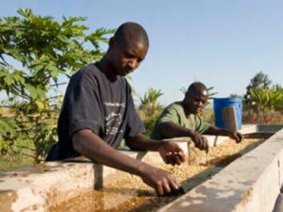 Мокрая обработка кофе — что это? И чем она отличается от сухой?